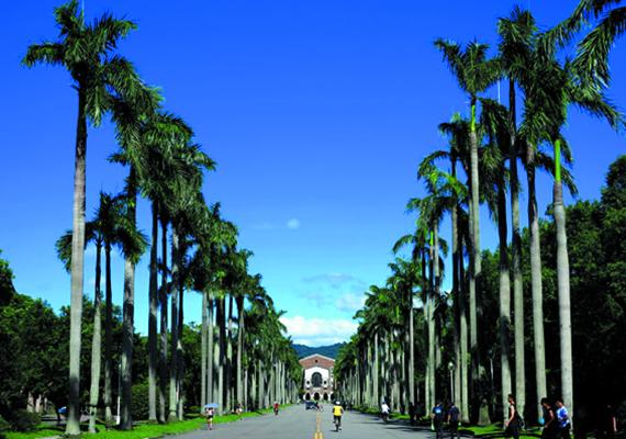 台灣大學校景