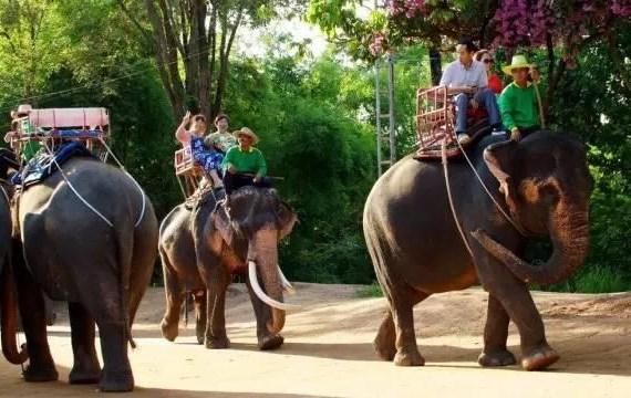泰國騎大象