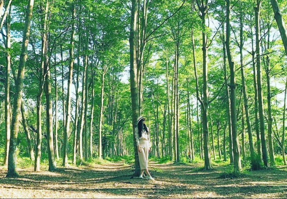台南虎山國小森林步道