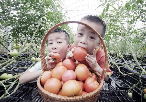 小孩吃番茄