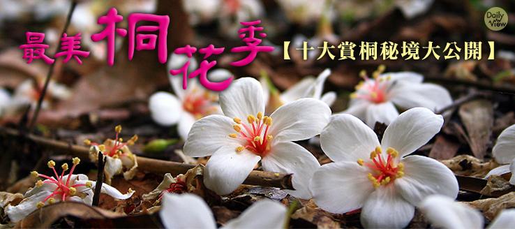 最美桐花季!十大賞桐秘境大公開