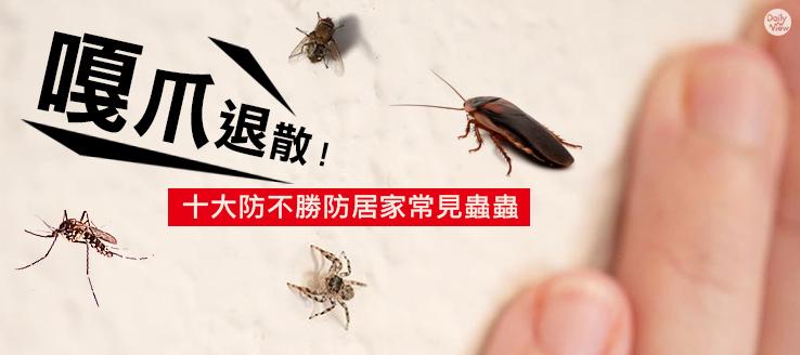 「嘎爪」退散!十大居家常見蟲蟲!