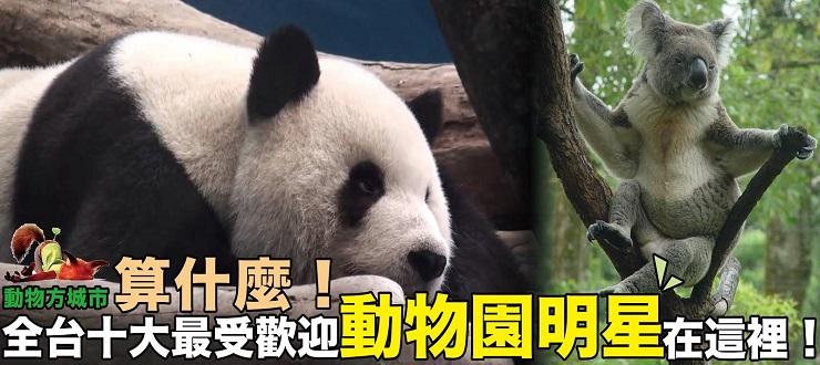 動物方城市算什麼!全台十大最受歡迎動物園明星在這裡!