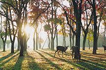 怡人舒適又清新!十大美麗公園來報到!