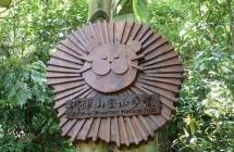 不怕太陽曬!全台十大休閒林蔭步道