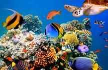 探索美麗的海洋世界,台灣十大絕美浮潛勝地!