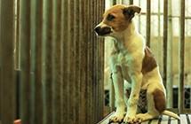 遛狗不繫繩才第二名?最令人火大的狗主人惡行是它!