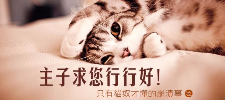 主子求您行行好!只有貓奴才懂的崩潰事!