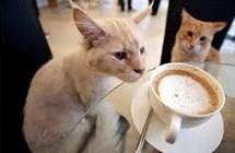 貓奴一定要收藏!療癒人心的十大貓咪咖啡廳參上