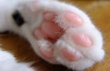聞貓腳竟然能紓壓?十大讓人意想不到「做了會感到幸福」的事