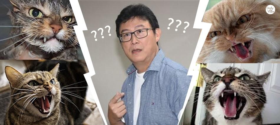 傻眼貓咪森77!40年老貓奴姚文智為何一秒被罵爆