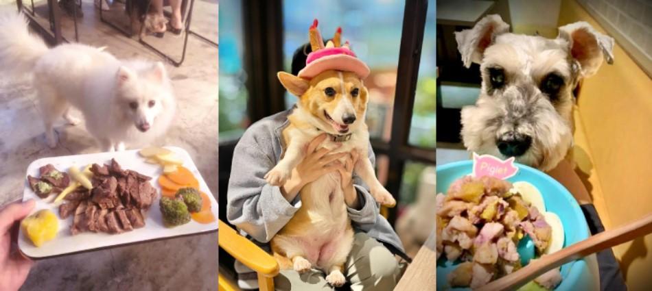 跟毛孩一起用餐!大台北10大提供「寵物餐」友善店家 專屬鮮食、生日蛋糕超澎湃