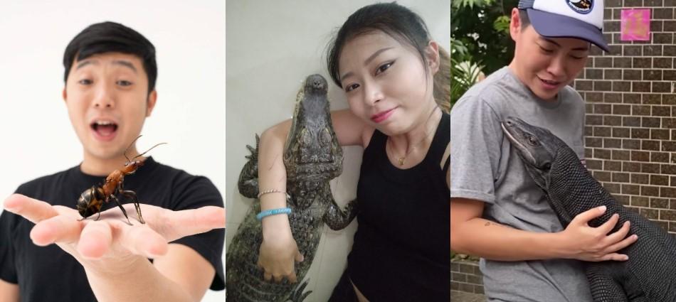 寵物YouTuber不只毛孩!還有人養「螞蟻、鱷魚」⋯十大特殊動物知識頻道正興起