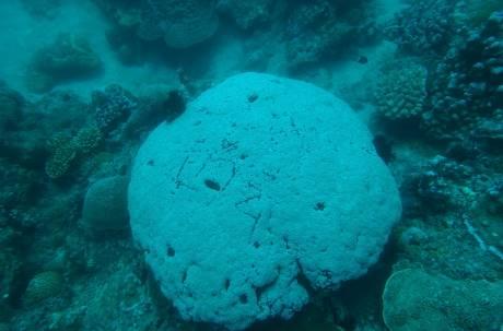遊小琉球在活珊瑚上刻名 網美遭肉搜撻伐急關臉書