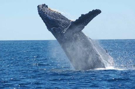 一條鯨魚能抵幾千棵樹!暖化救星天然神器「護鯨就是固碳」
