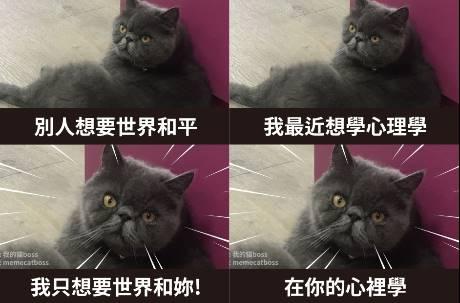 本喵不只會後空翻!  霸道灰貓撩妹語錄融化網友心