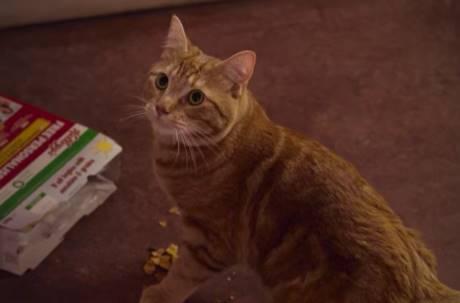 《遇見街貓Bob》主角驚傳過世 網友慟:2020帶走好多生命