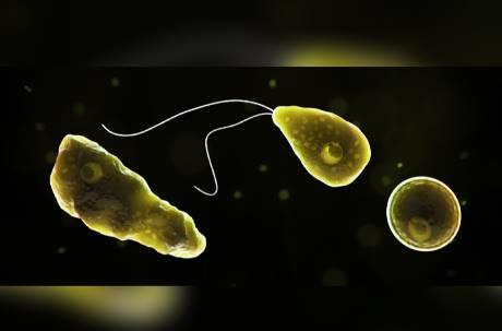 夏日玩水吸入「食腦蟲」! 美國143人感染僅4人存活