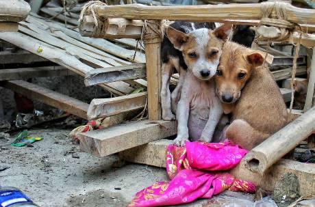 巴西疫情惡化 民眾「擔心被傳染」寵物棄養增加5倍