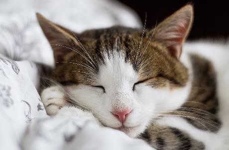 為什麼貓派會崛起?不只成本低 網友淚揭真實原因