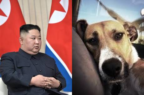 金正恩:養狗是資本主義炫富!北韓徵收市民愛犬送到「狗肉店」