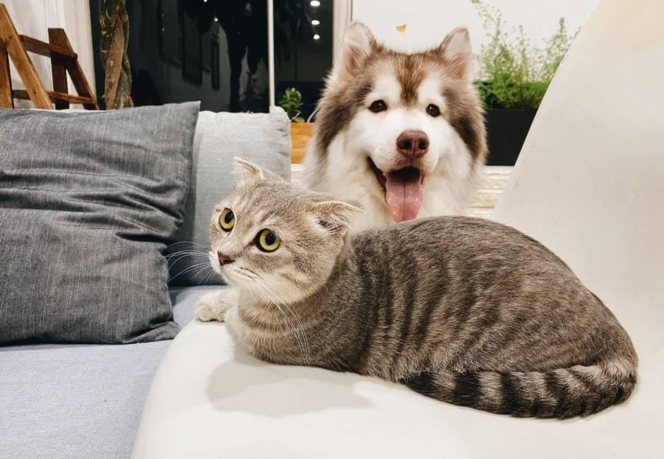 毛小孩之戰⋯狗派贏了!資策會調查:全台飼養貓佔31%排行第三