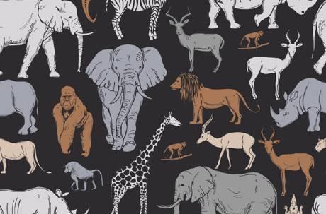 先看到獅子還是大象?一張圖秒測未來 你重家庭還是重夢想