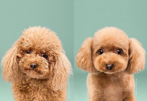 髮型對一隻狗來說有多重要,看完這幾張前後對照圖你就明白了!
