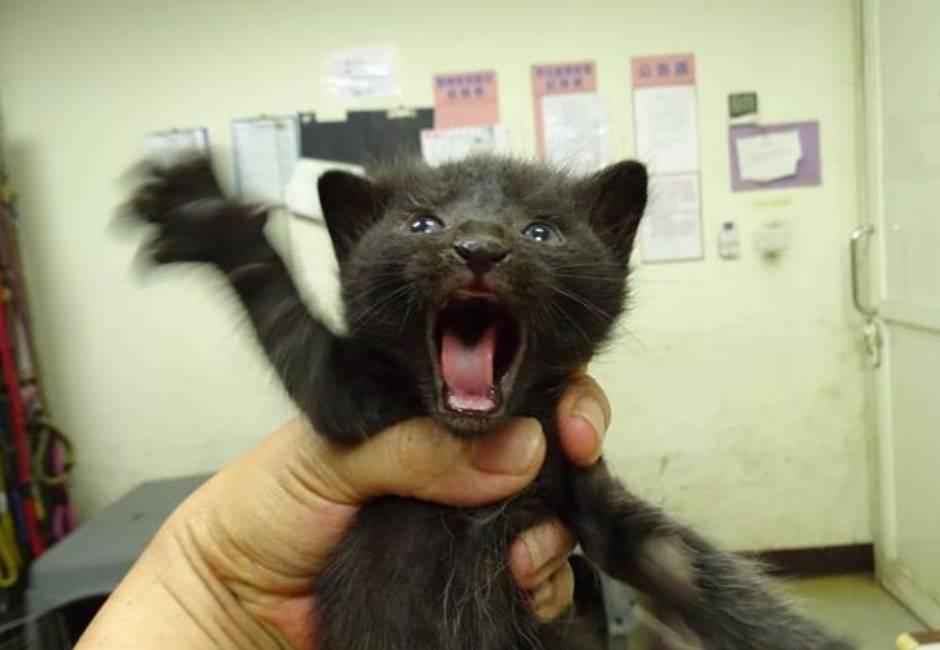 動保處表情超有戲的小貓,網友:這不養行嗎XD
