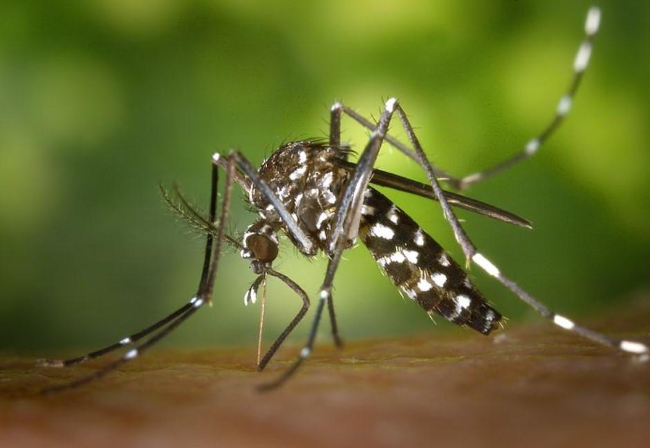 解密/肉吃太多才會被蚊子叮?這些錯誤迷思讓你永遠被叮超慘!