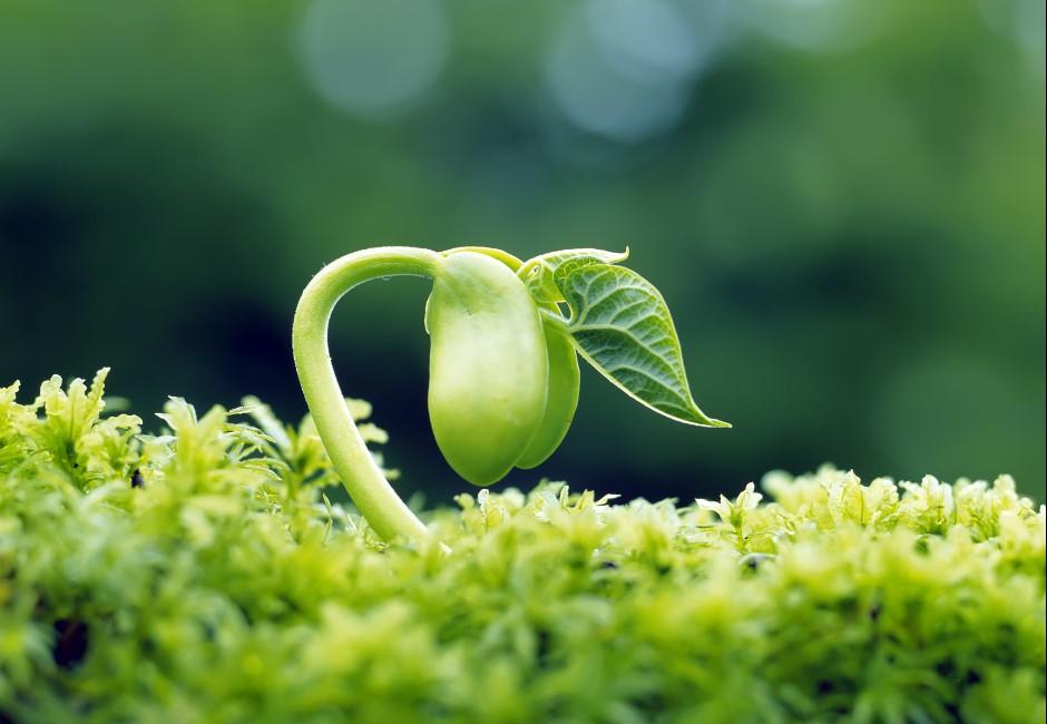 素食者怎麼辦?研究發現「植物也會痛」 網崩潰:吃沙拉根本虐殺