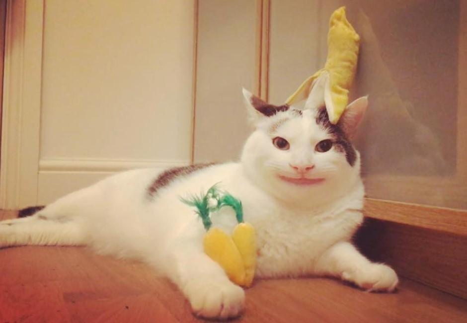 「假笑貓」靠著禮貌臉讓房東破例養寵物 但假笑背後原因有洋蔥…