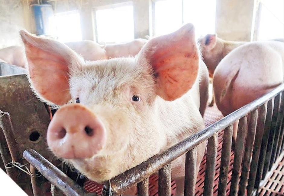 當心不只有中國!比利時、烏克蘭等46國家攜肉品入境都罰20萬