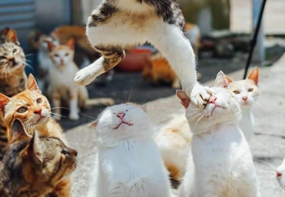 為何我們甘願成為貓奴?科學解釋讓人發抖「貓果然是來統治世界」