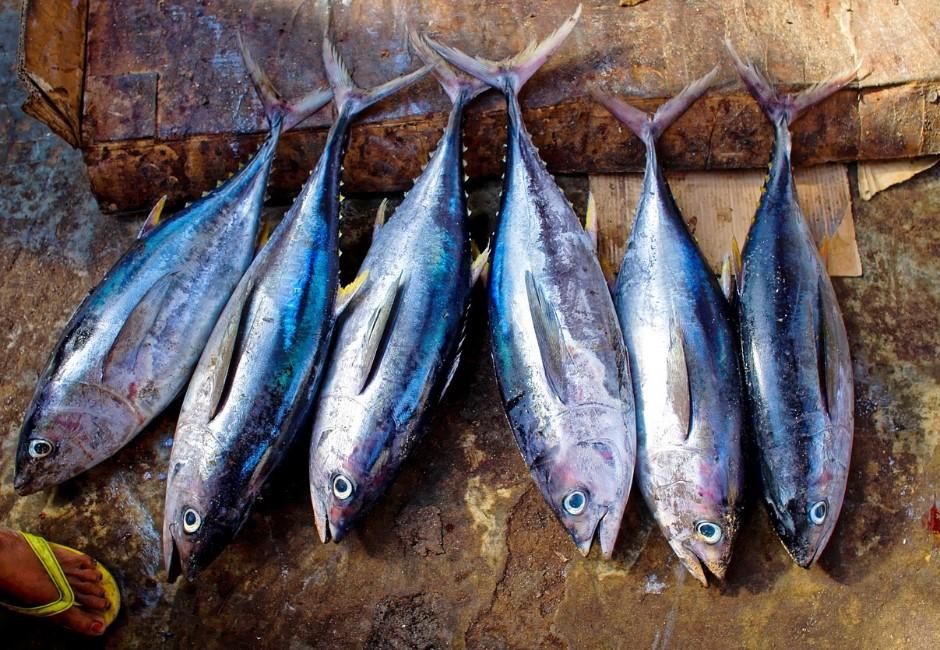 魚不只有記憶,甚至比你更怕痛!原來我們吃魚的方式都很殘忍…