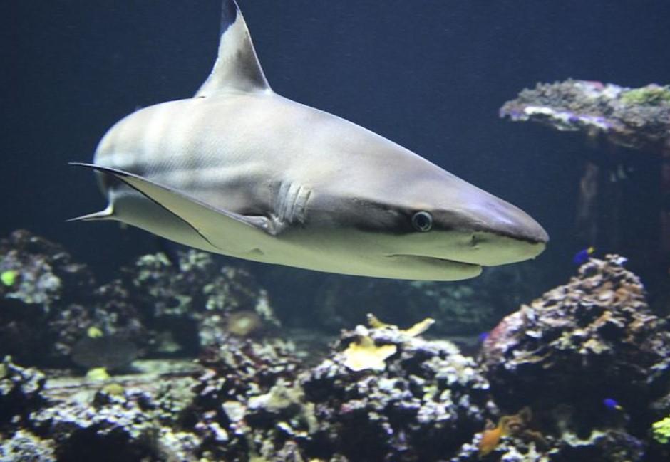 鯊魚不會吃其他魚?幹話太認真海生館急澄清:真的不是工讀生啦!