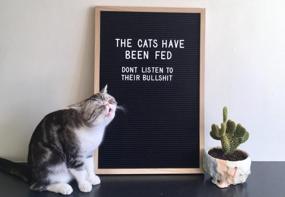 貓奴不捨喵皇咖啡廳外含淚等門…店家無奈公告:牠是小騙子!