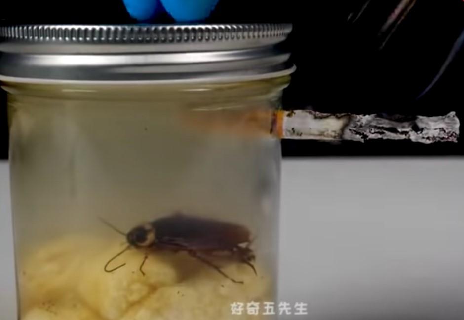 影/菸害多恐怖?他自製毒氣室讓蟑螂連抽20支菸 結局網戰翻!