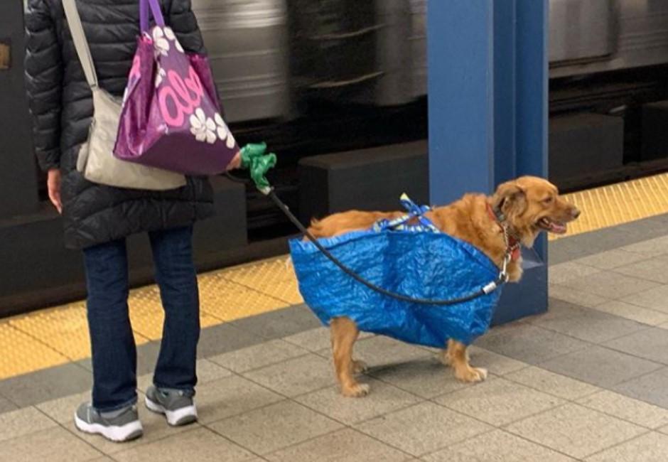 圖/地鐵規定寵物要裝進「容器」裡…結果主人這樣做網笑翻