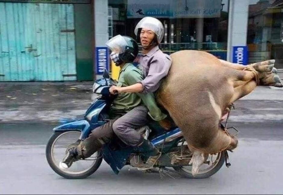 多圖/越南日常「摩托車當卡車用」!最狂的不只載冰箱