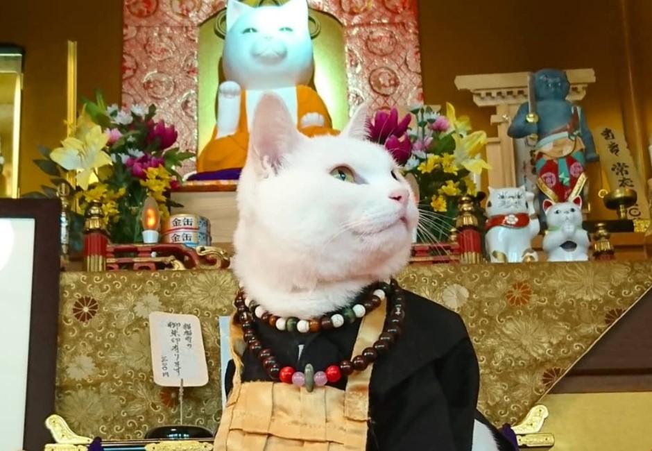 奴才們快來拜! 「喵住持」坐鎮的貓貓寺讓人瞬間找到新信仰!
