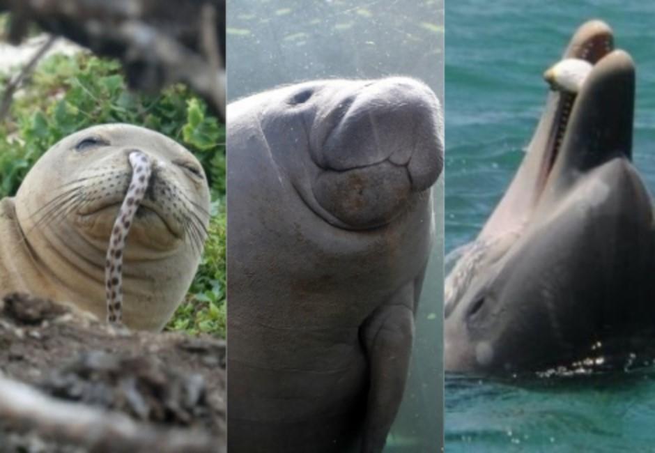 這些動物其實超ㄎㄧㄤ!海牛靠放屁游泳、海豹鰻魚插鼻耍帥
