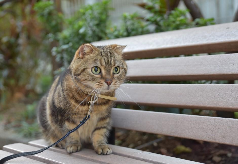 可以帶貓咪出門散步嗎?貓奴一定要先知道的3件事!