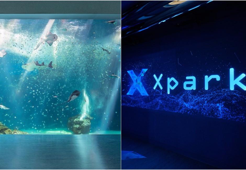 Xpark魚撞玻璃遭批!3動物景點惹議 「騎海豚」6年死9隻