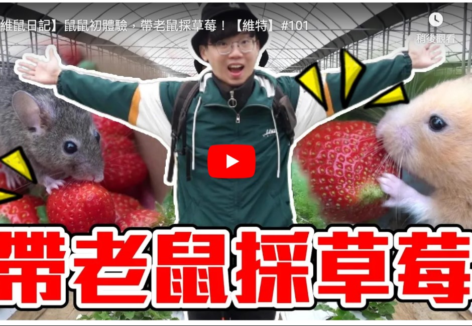 YouTuber維特「帶老鼠採草莓」惹議! 網怨:有跟園方溝通過嗎?