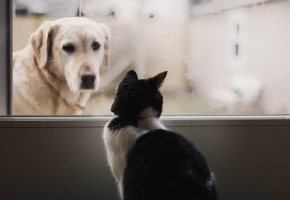 日本超紅心測!憑直覺選3隻動物 解析你給別人的「真實印象」