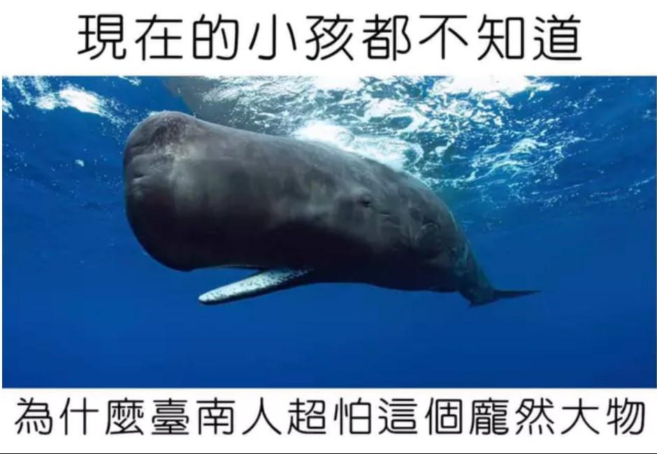 為何鯨魚照片就能喚起台南人的恐懼?「抹香鯨爆炸事件」網怕爆:臭到往生