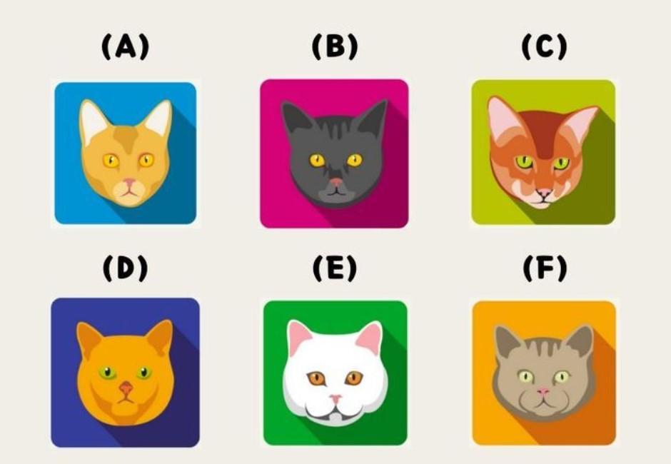 你是善良還是邪惡?超萌貓咪心理測驗 看出你的天真指數有多少
