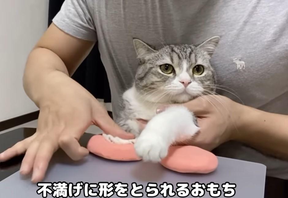 金氏世界紀錄「最多人觀看的貓」在日本!累計破6億點閱數