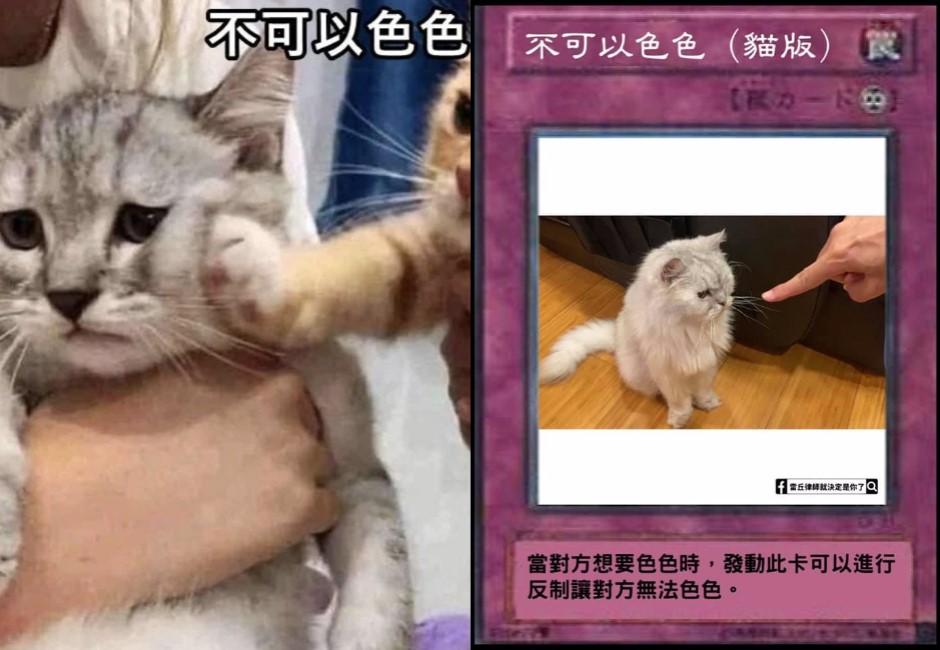 「不可以色色」有貓版?網自製梗圖反制柴犬 貓咪霸氣暴打:你敢管老子色色!